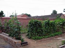 Garden Patch on Alleyway - Jixian