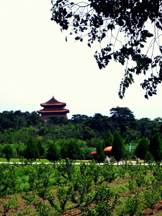 Qing Tomb Through Fields