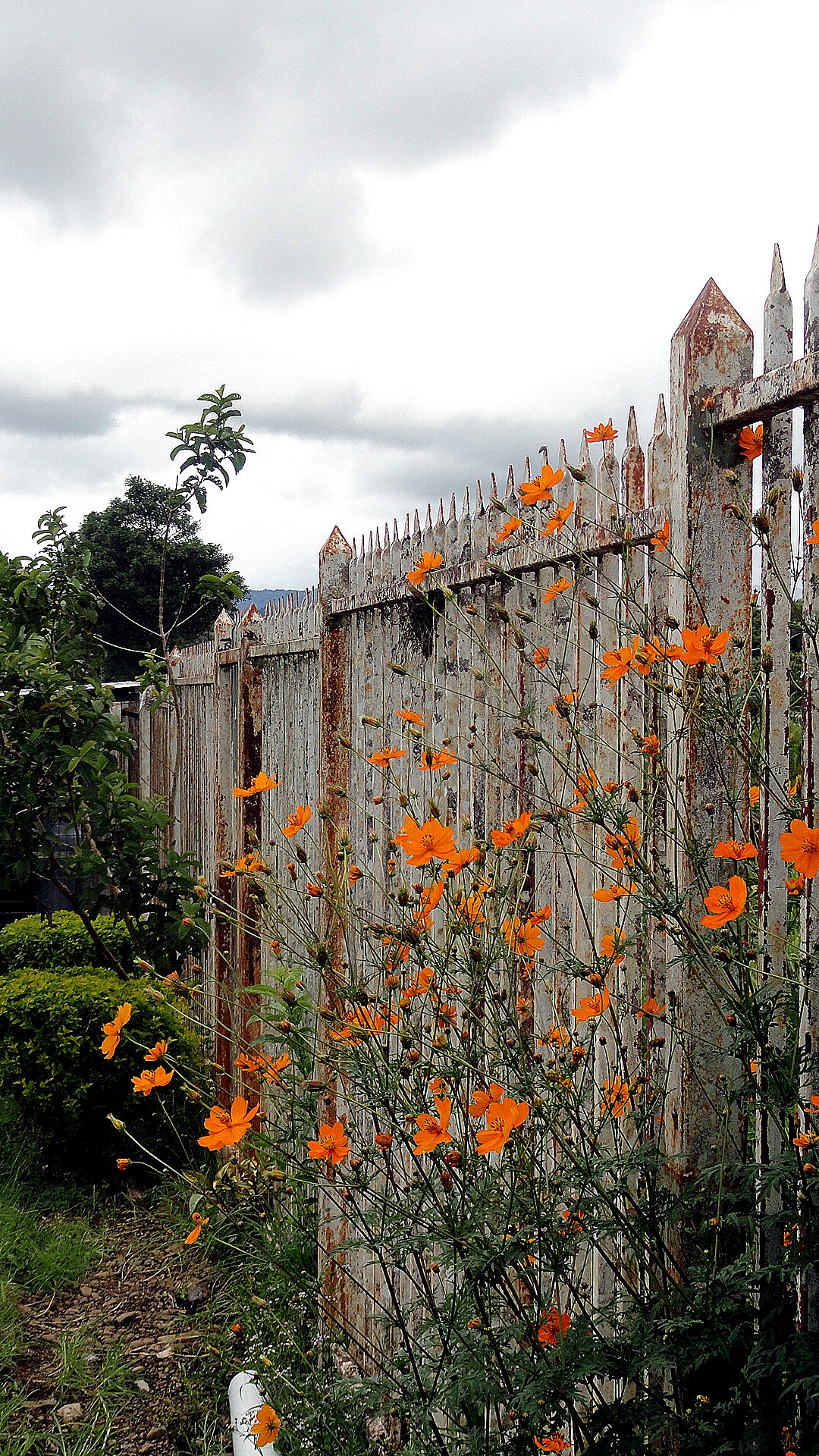 Flowers & A Fence
