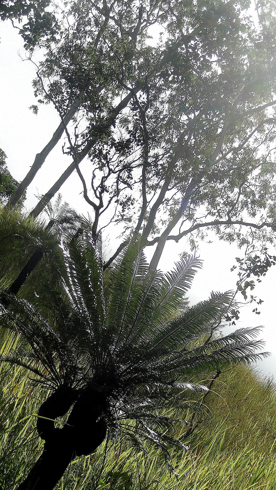 Mt Diamond Hike - Palm & Tree on a Hill
