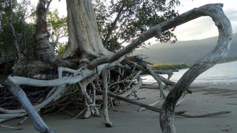 Erosion and Roots - Kewarra