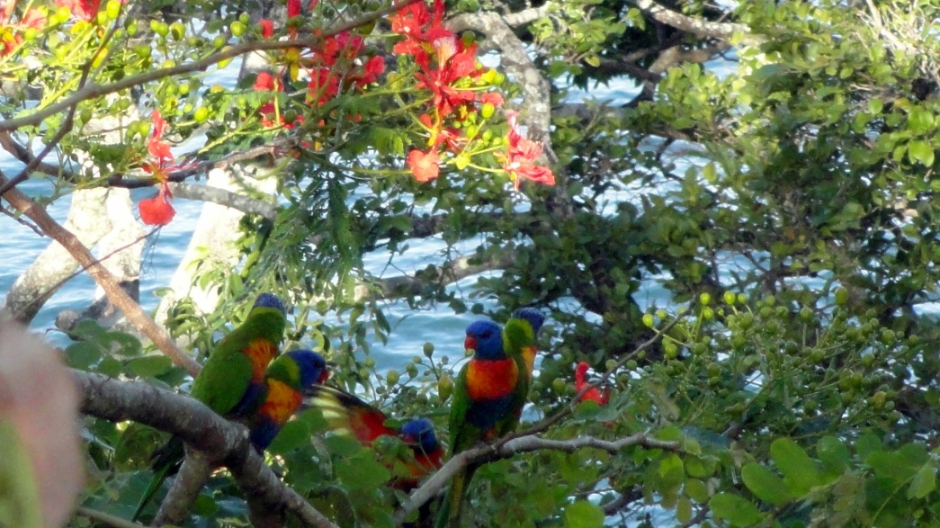 Gaggle of Parrots