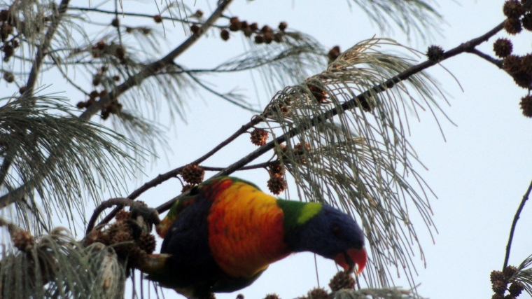 Parrot Eating 2