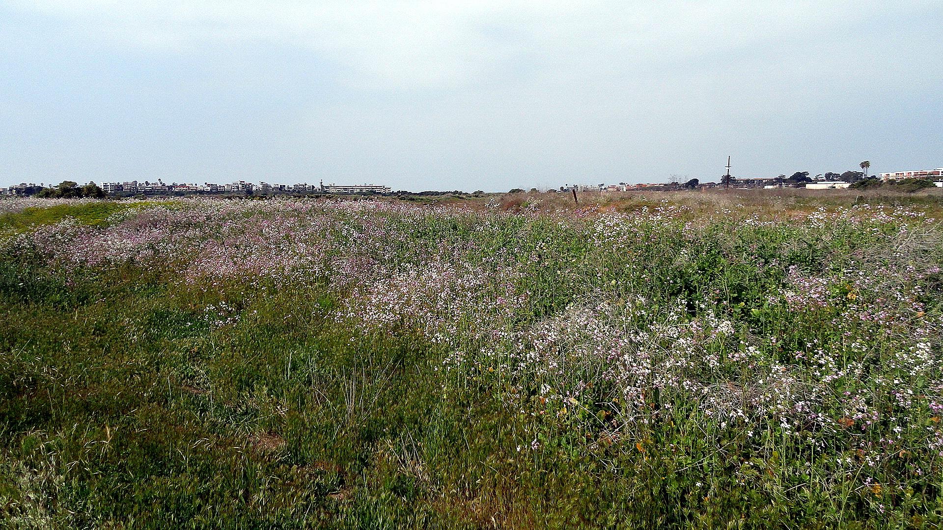 Ballona Wetlands Wildflower Field