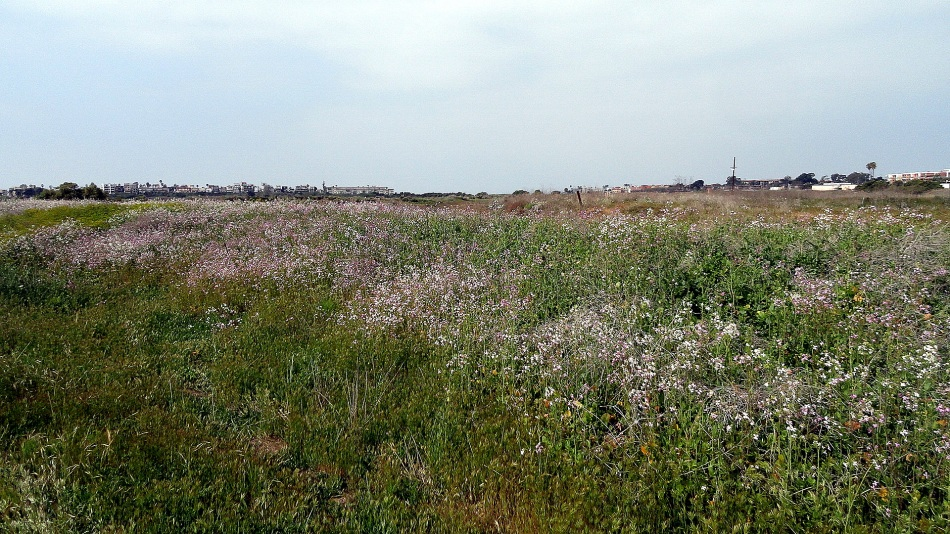 Ballona Wetlands Wildflower Field