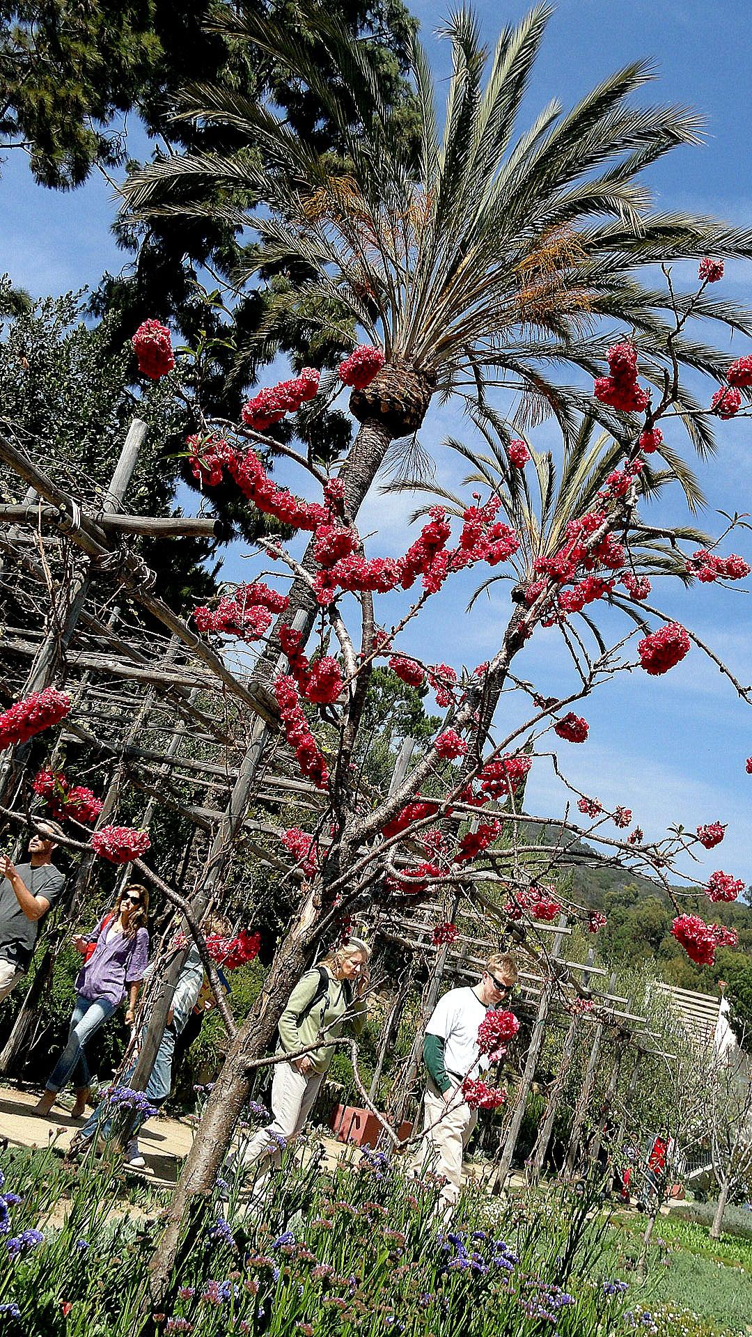 Flowers & Trees in Getty Villa Herb Garden