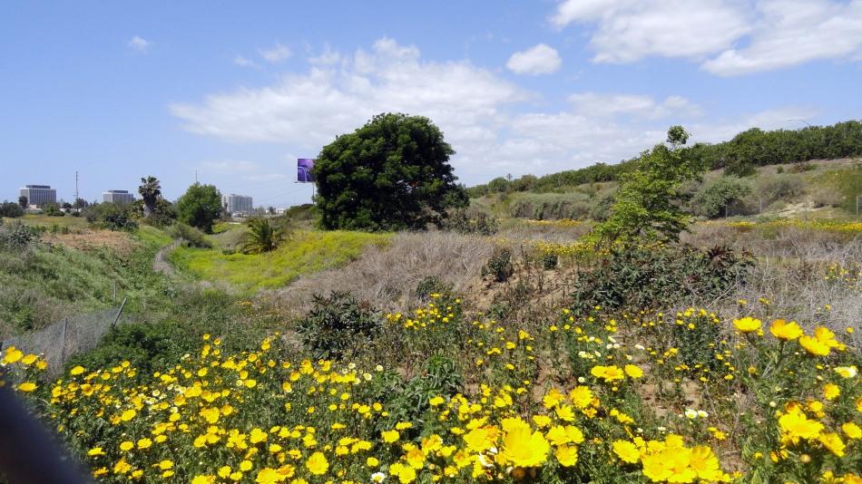 Ballona Creek Wildflowers
