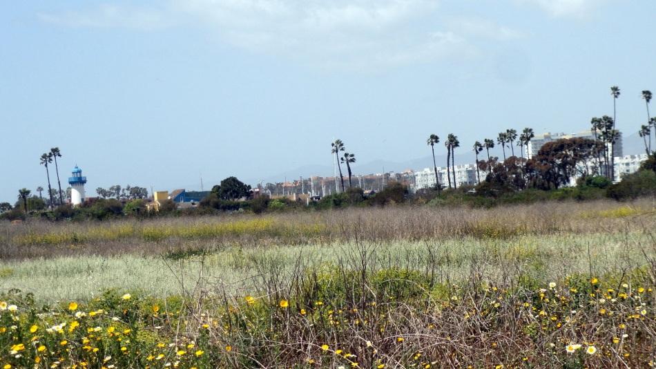 MdR Wetlands View