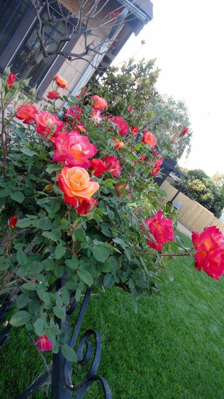 Venice - Rose Garden