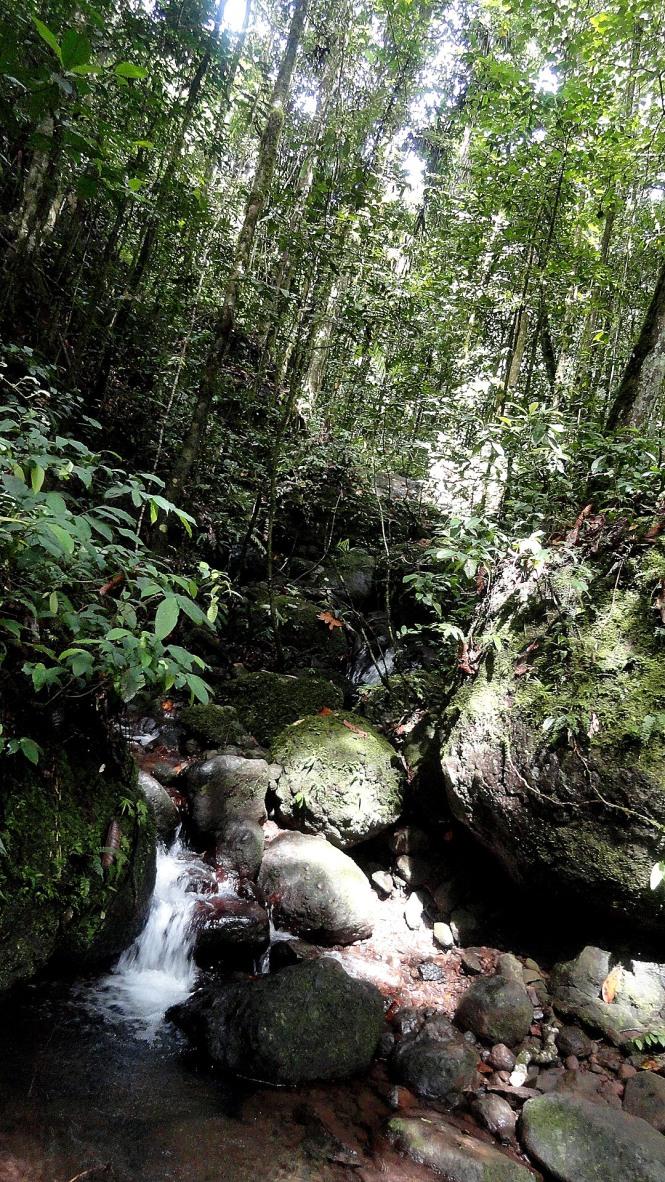 2.1 Kokoda - Creek