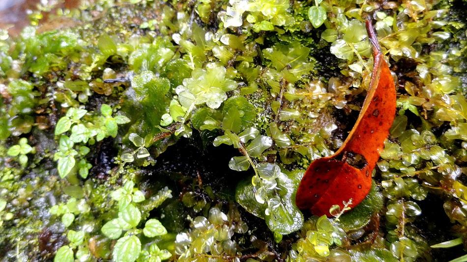 Ambua - Moss & Fallen Leaf