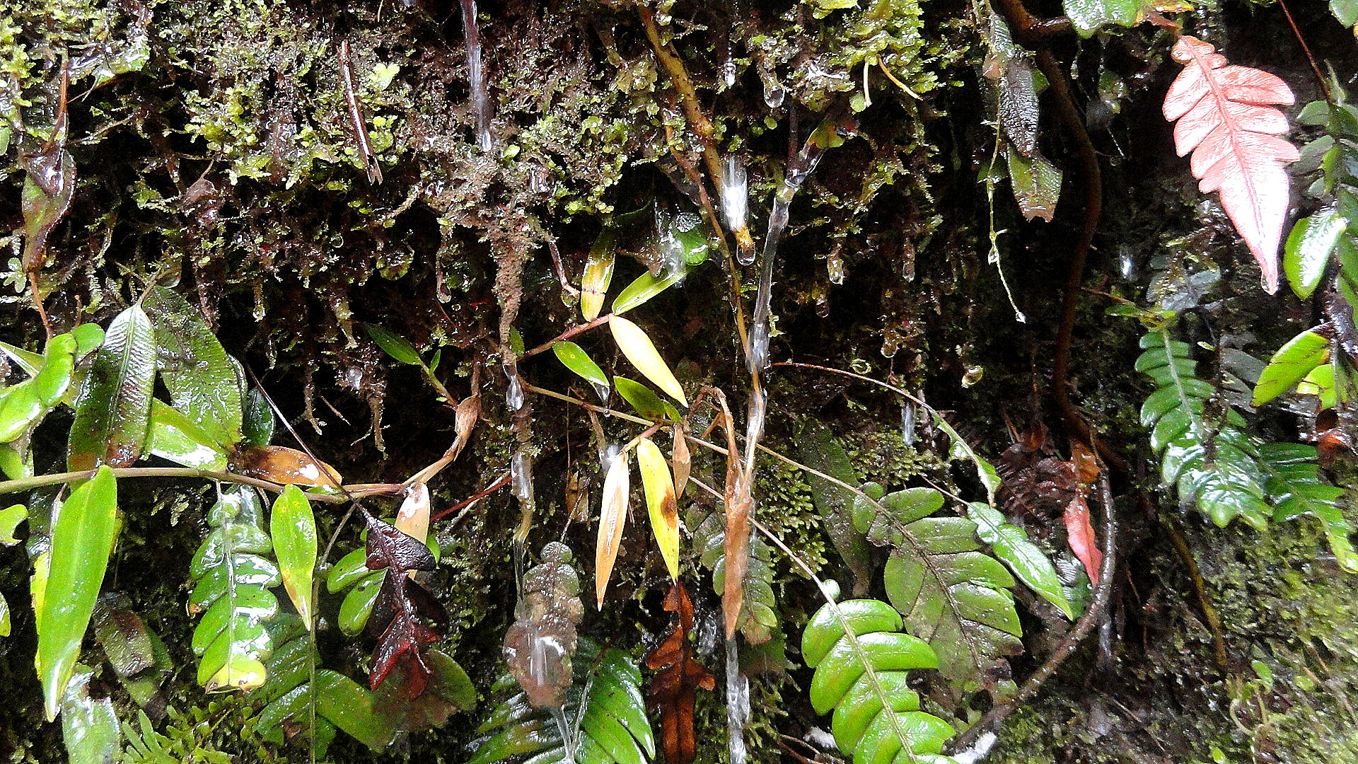 Ambua - Mossy Ledge Detail