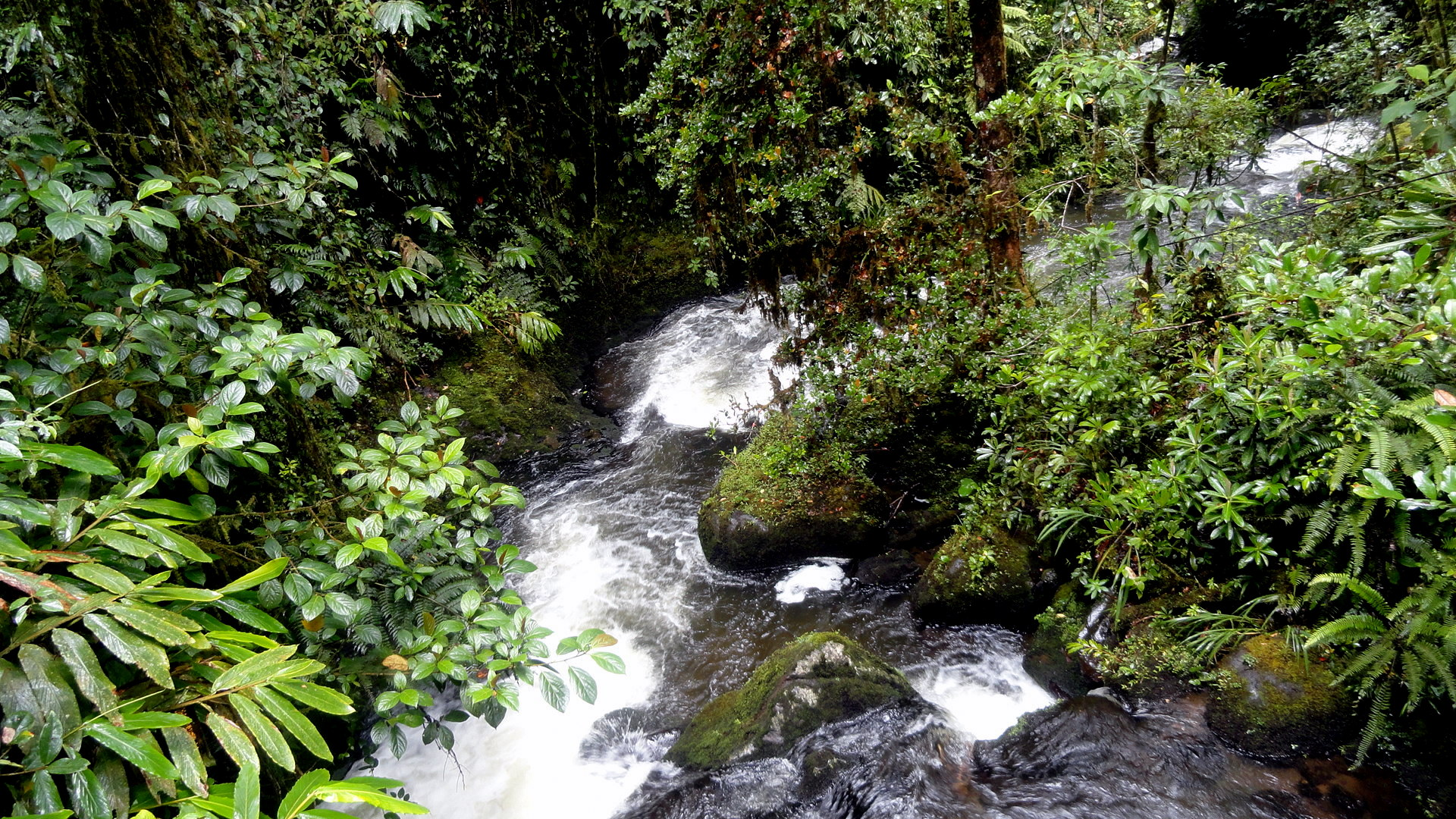 walk in a rain forest What do you know already purpose: -to teach and educate about the choco forest and the many roles its land plays on our world -to explain the benefits of the lifestyle of choco forest and the detriments of deforestation/extreme forestry.