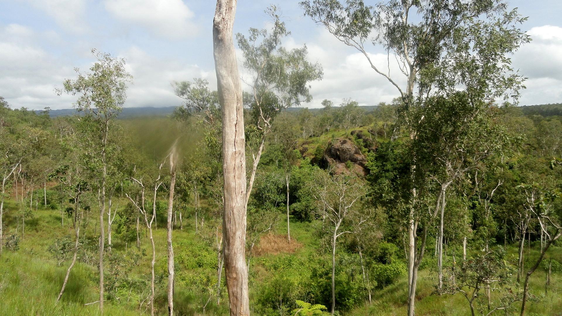 Boulders - Trees - Grass - RP Walk