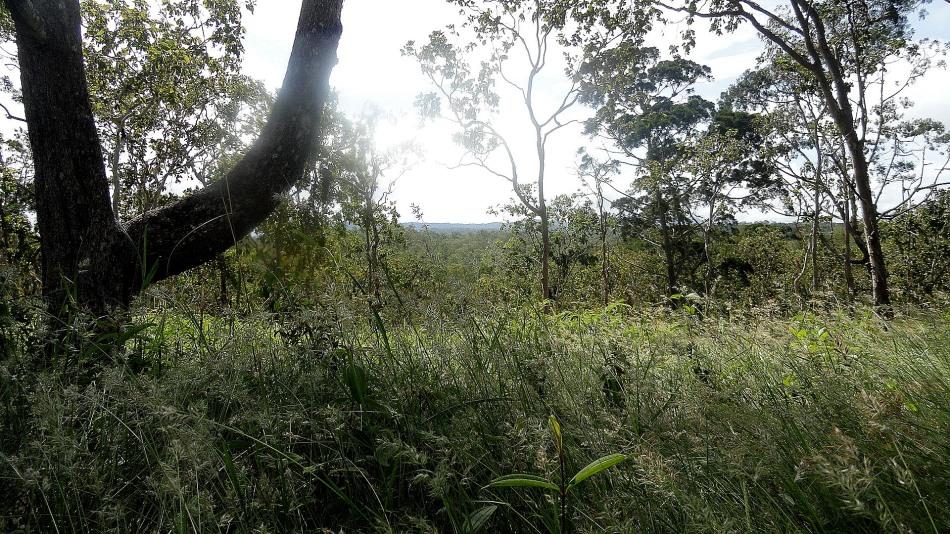 Grasslands & Trees