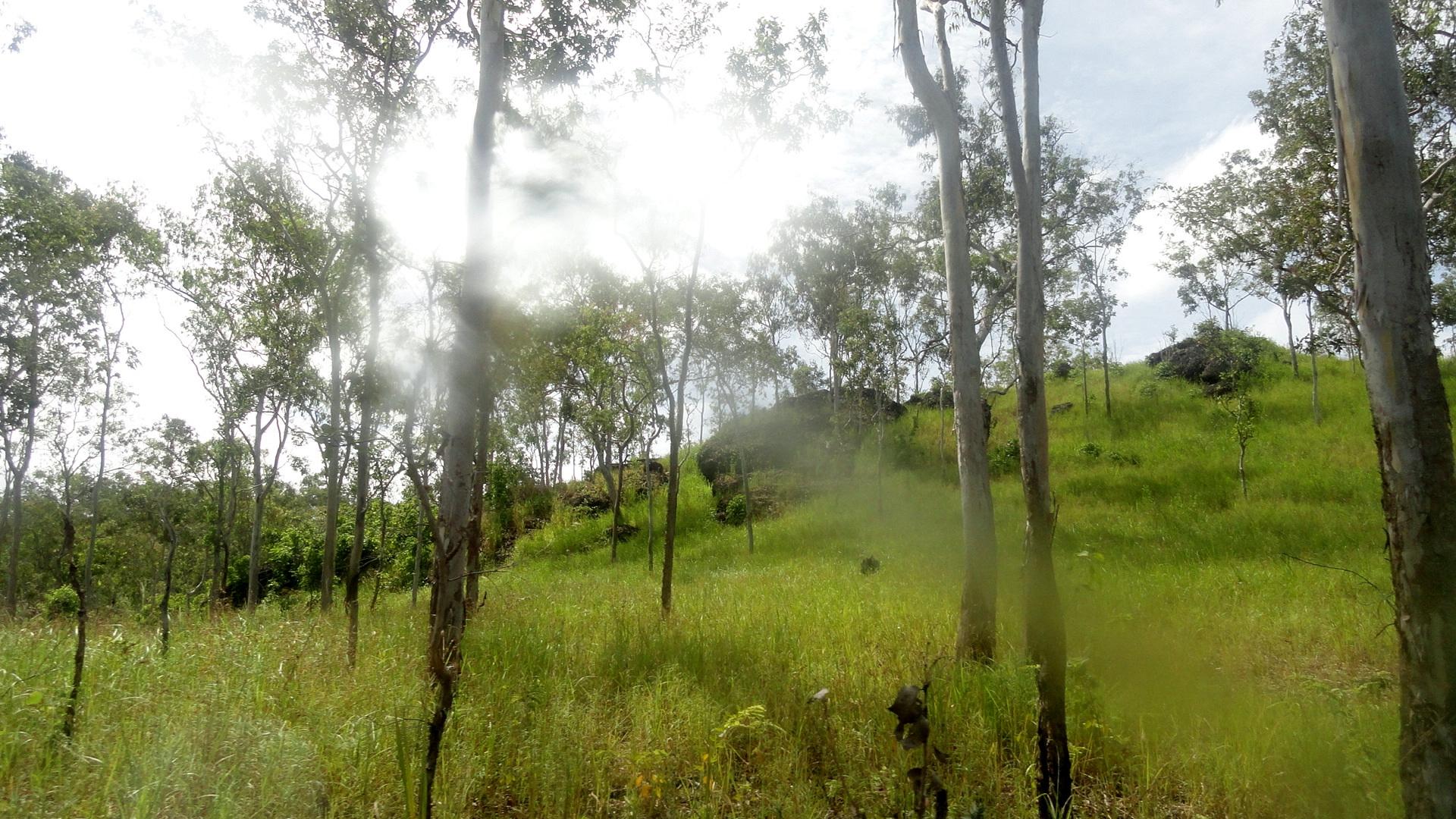 Rocky - Treey Hillside