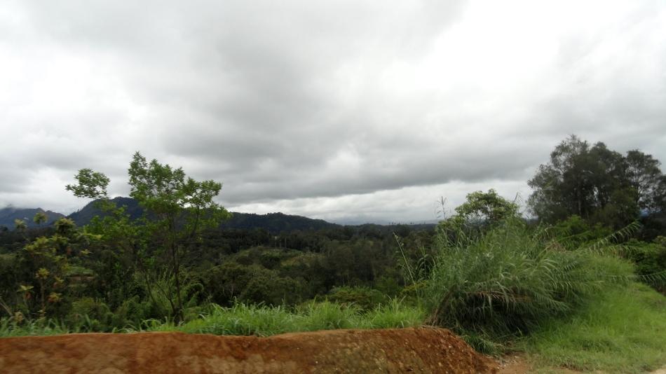 Hills by Tari