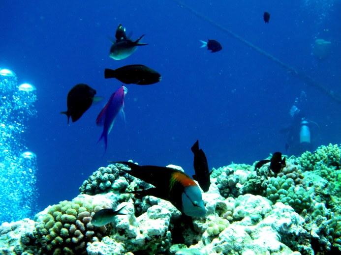 Aquaium Scene w Diver & Bubbles