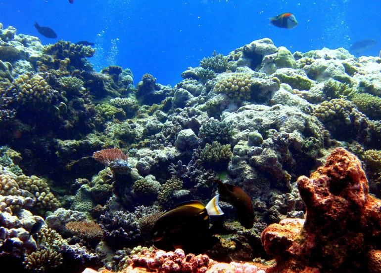 Aquarium Scene 2