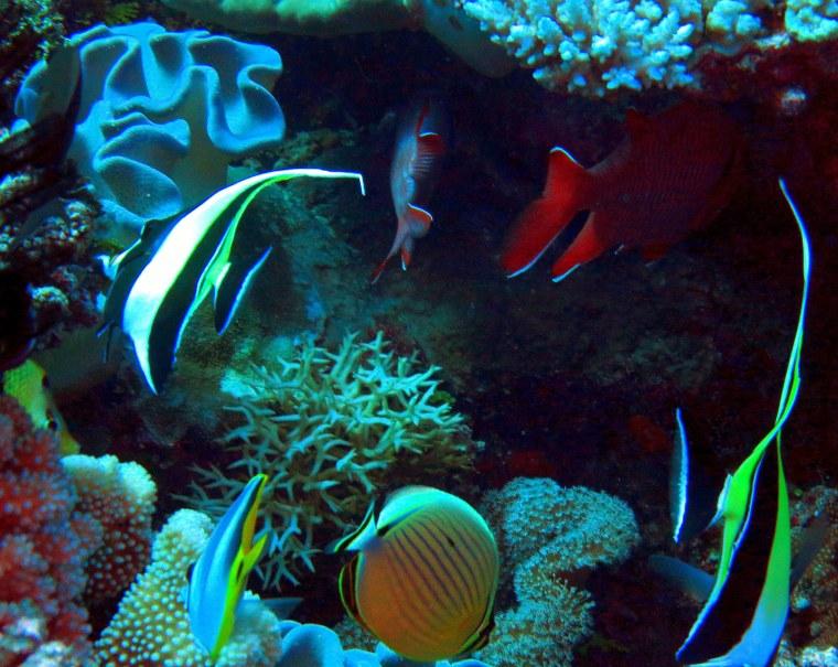 Aquarium Scene