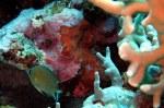 Coral & LittleGrey