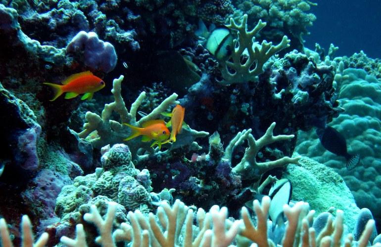 Aquarium Scene w Coral