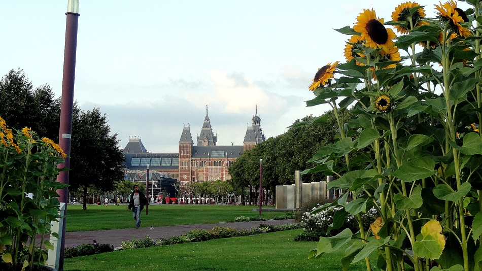 Rijksmuseum & Sunflowers
