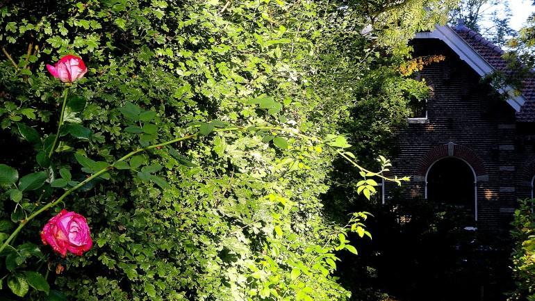 Rose-Hedge-House Flevopark