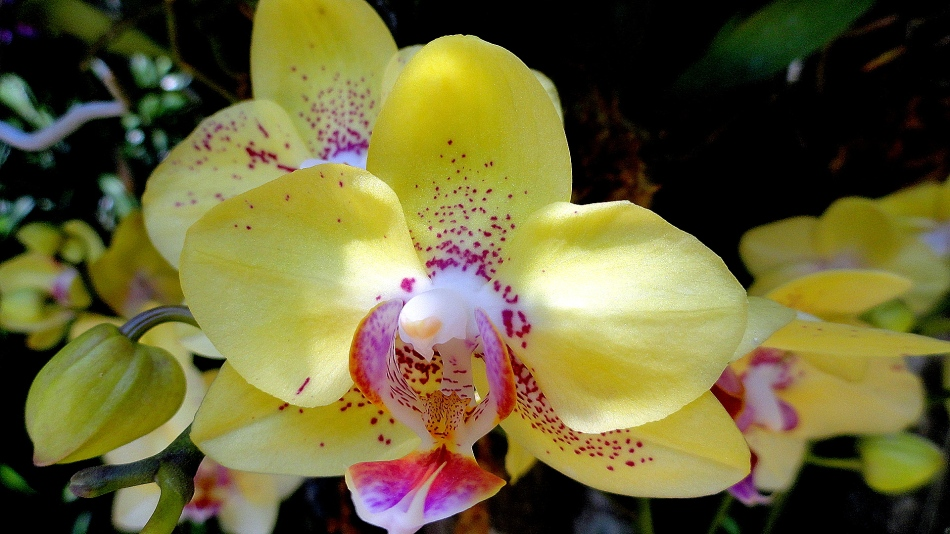 Orchid Show Yellow & Pink