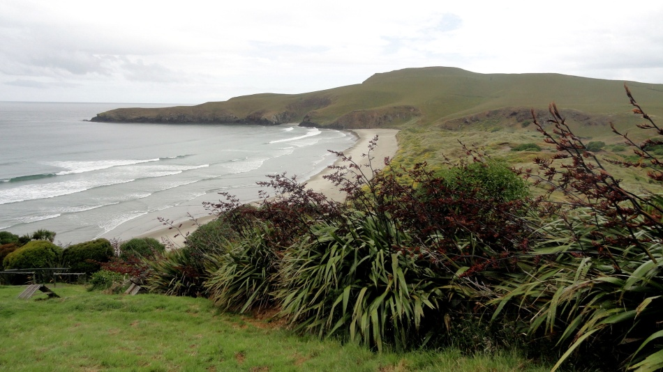 Otago Peninsula Yellow Penguin Beach