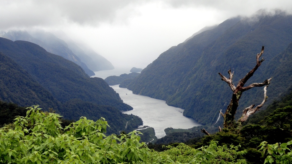 Top of Doubtful Sound