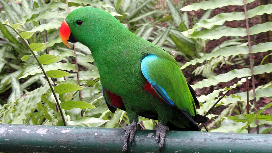 Hungry Green Parrot