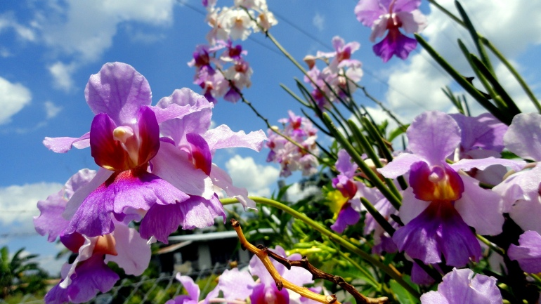 Orchids & Sky