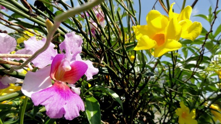 Orchids & Trumpet Flowers