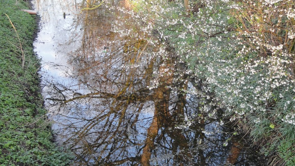 Reflections in a Moat