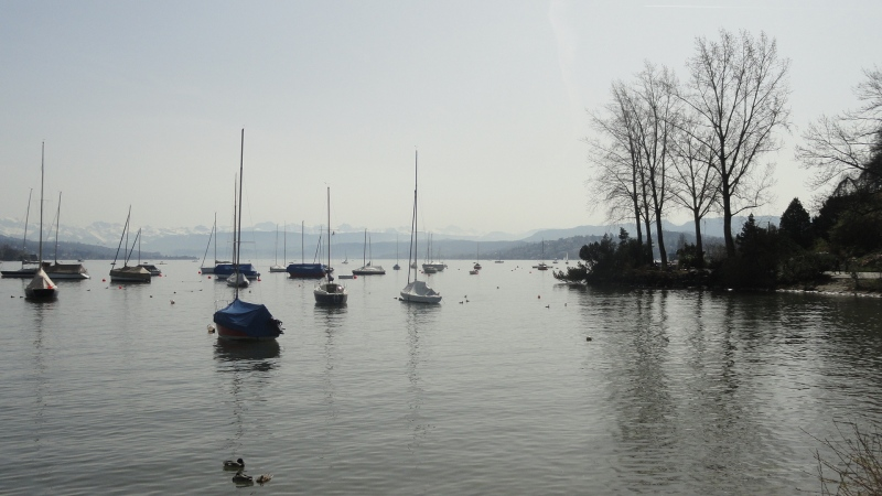 Lake Zurich - Mtns - Boats