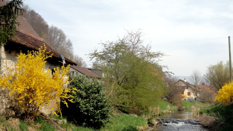 Spring Streamside