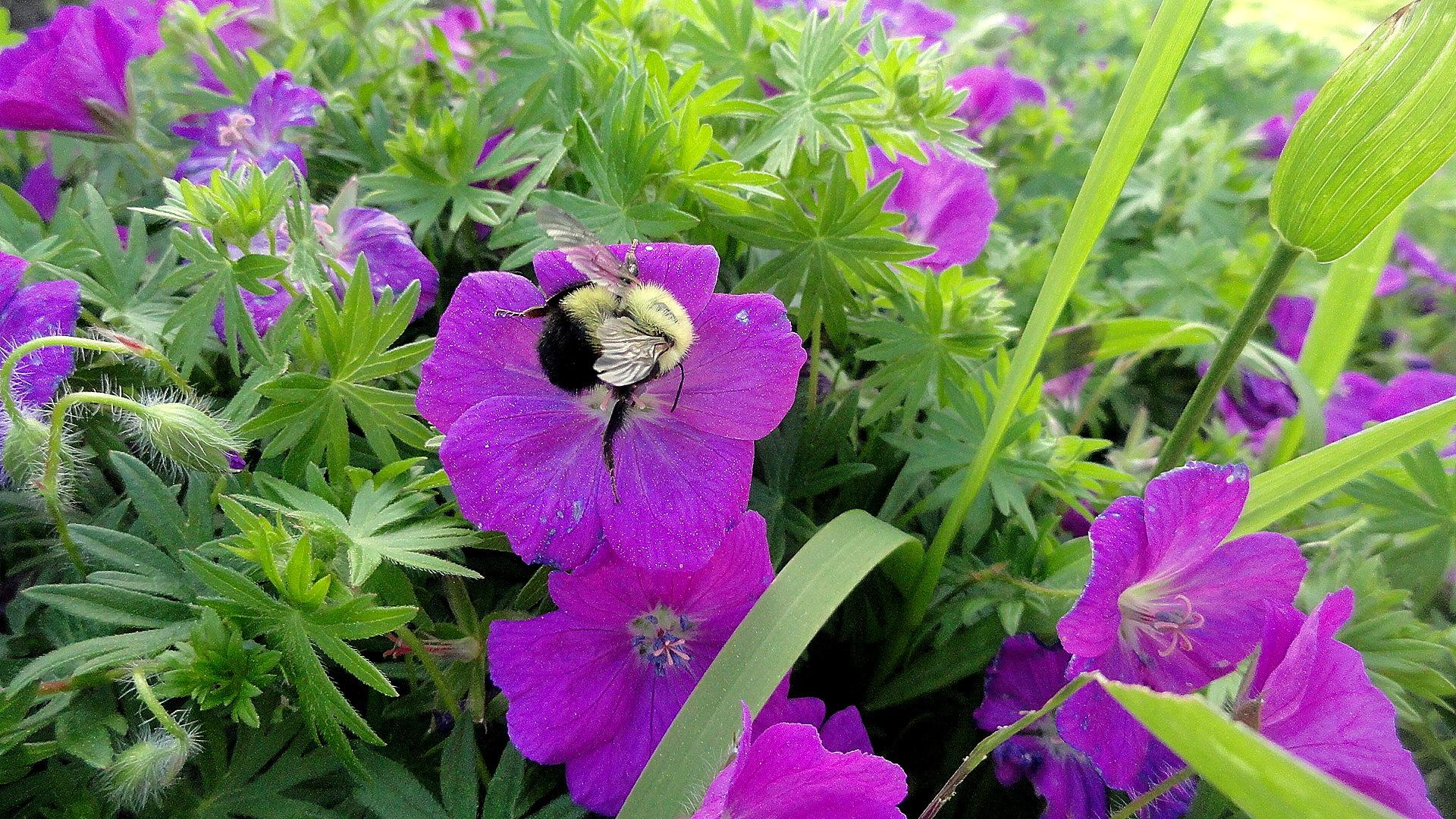 Bee & Purple Blooms