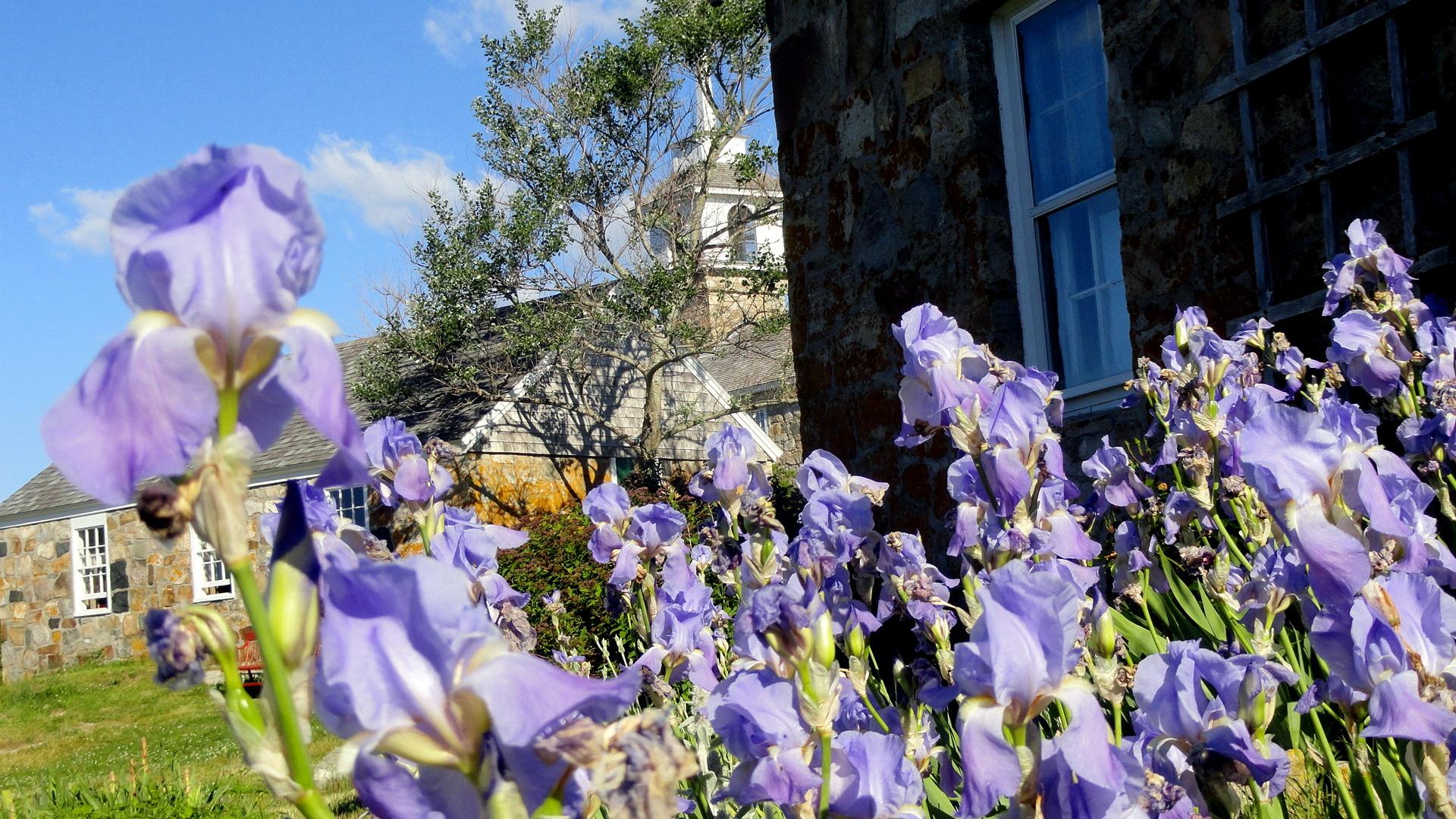 Blue Irises & Stone House