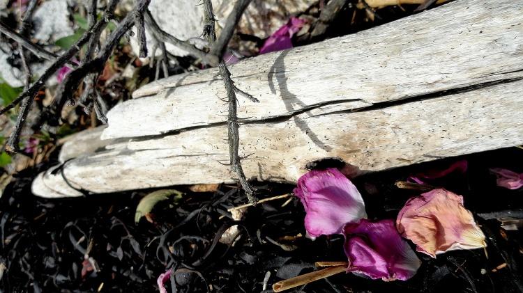 Driftwood & Rose Petals