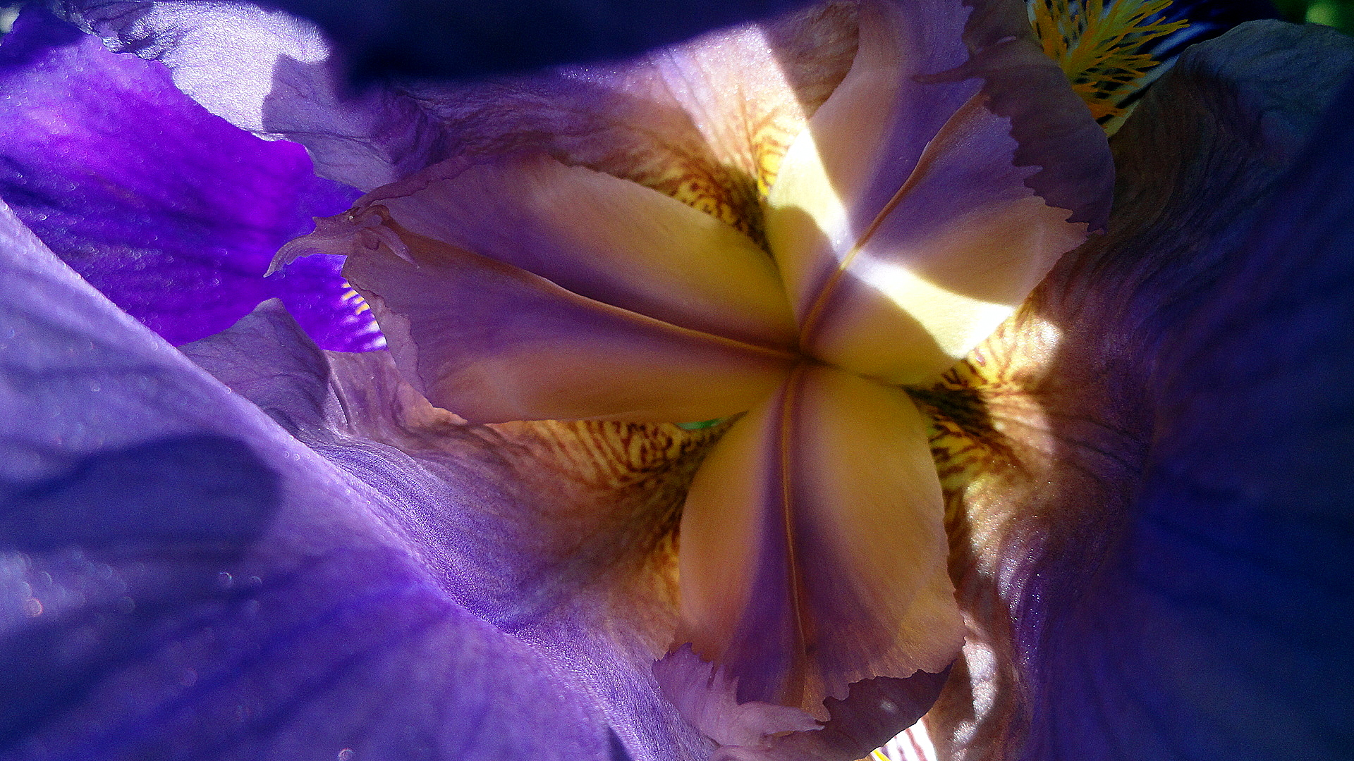 Iris Closeup 2