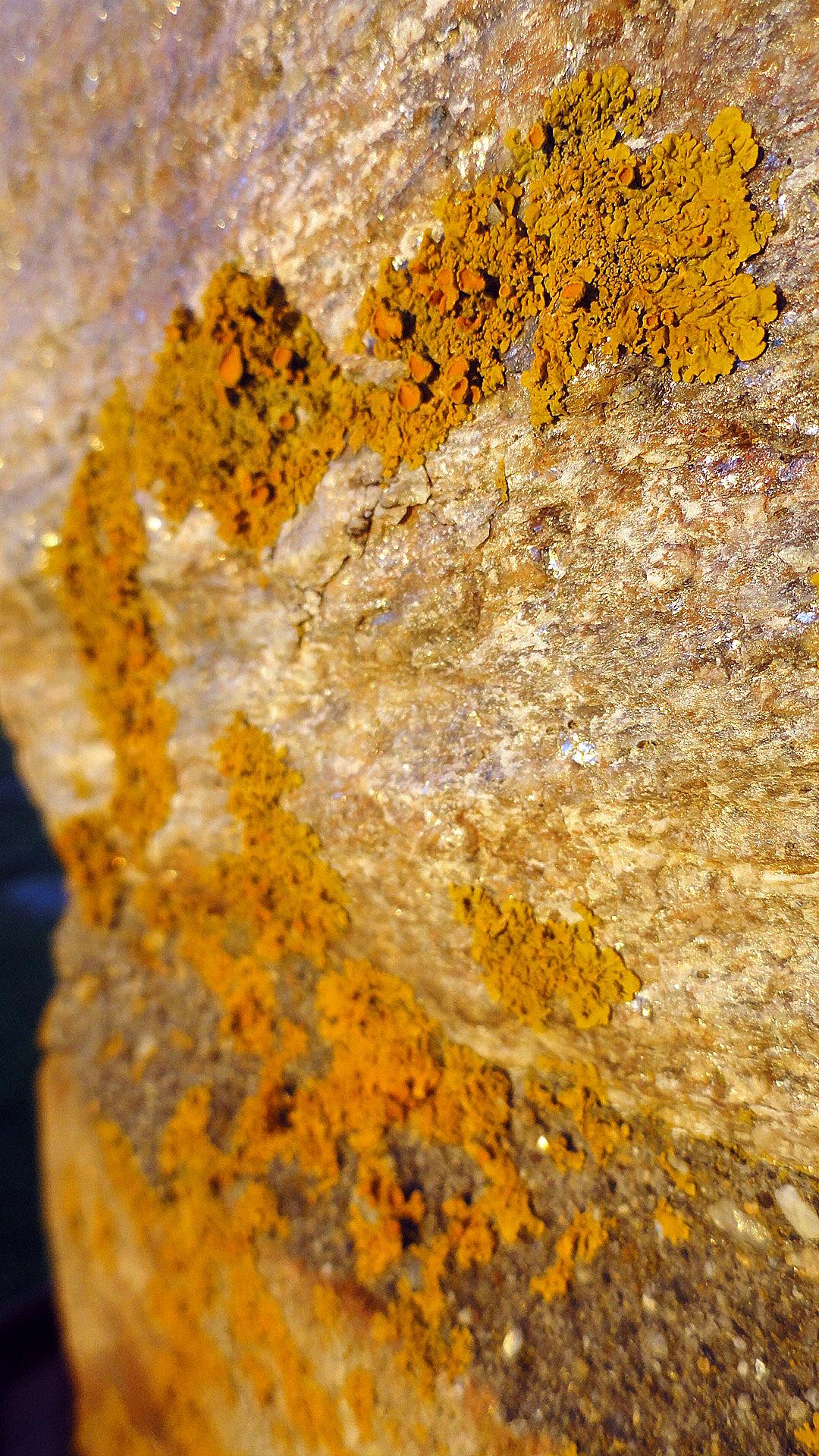 Lichen at Sunset