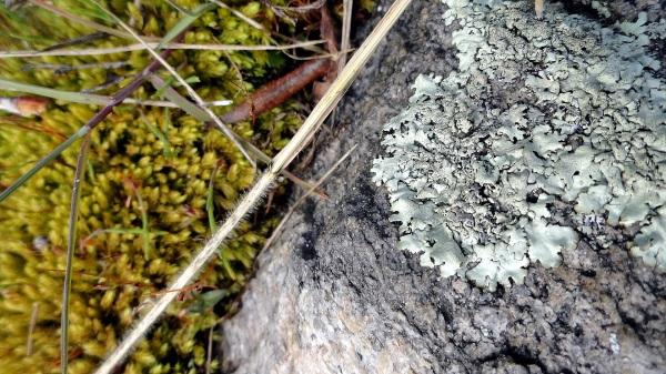 Lichen - Rock - Moss