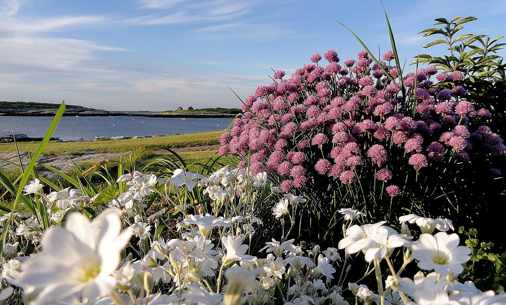 Massed Blossoms & Harbor 2