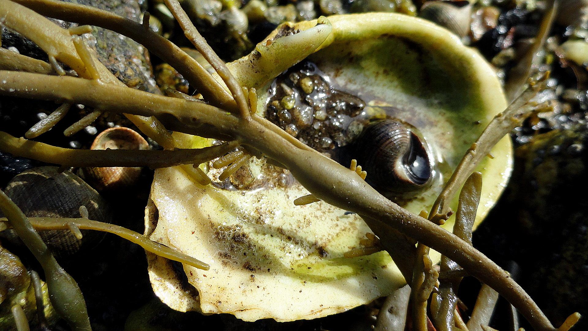 Shelll & Seaweed at Lowtide
