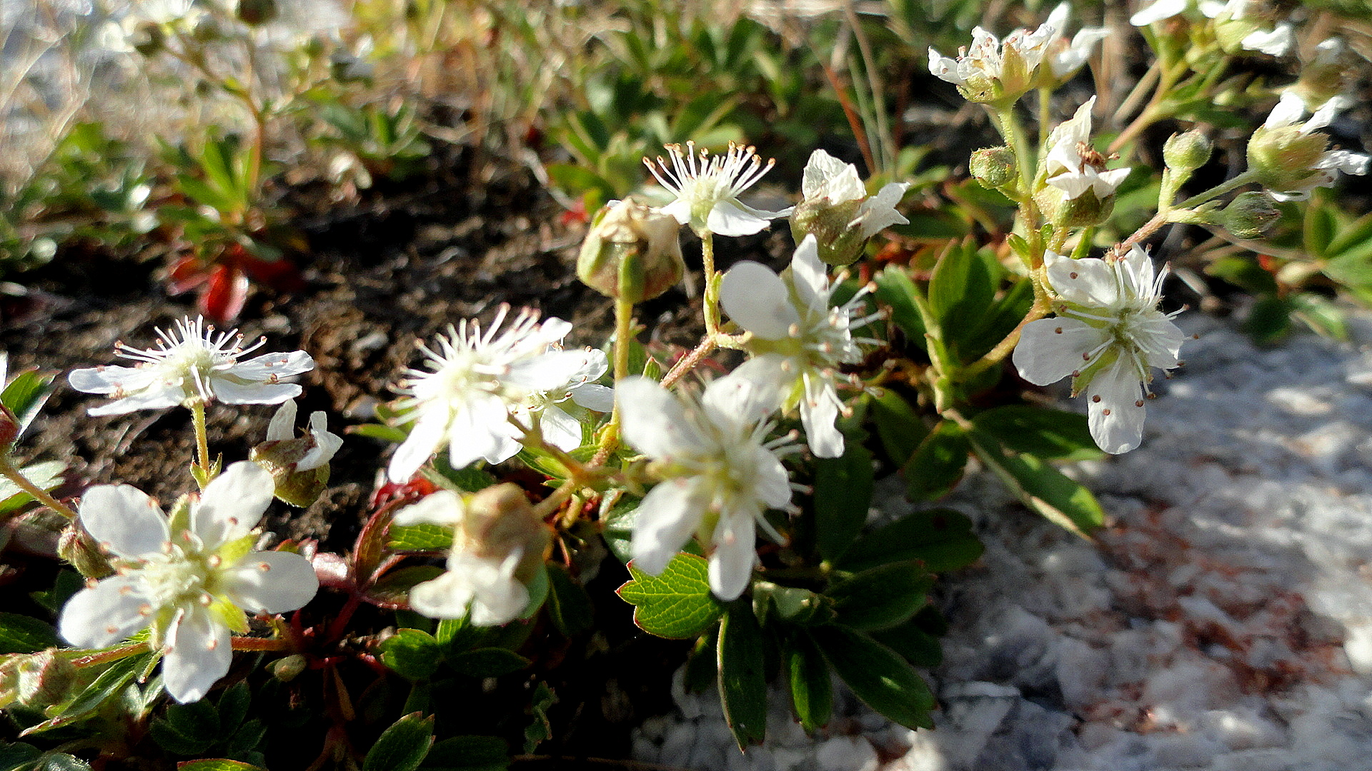 Tiny White Flowers Rock So Much World So Little Time
