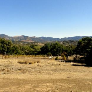 Bennet Valley Views