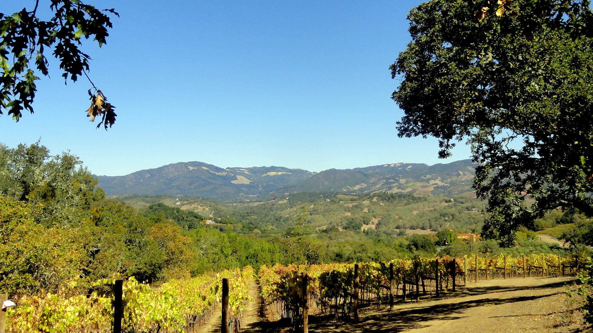 Bennet Valley Vineyard & Mtns