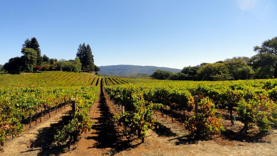 Bennet Valley Vineyards
