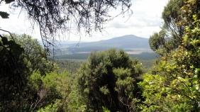 Landscape - Near End of T Crossing
